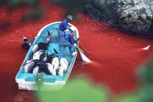 Momento de la caza de delfines