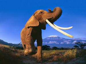Fuente de la imagen: CITES