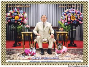 Felicitación de Año Nuevo del rey Bhumibol y sus mascotas de 2011.