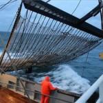 Europa dice 'no' a la pesca eléctrica